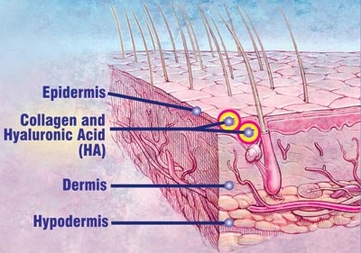 HA tự nhiên có trong cơ thể con người tập trung tại khu vực collagen ở lớp hạ bì còn đóng vai trò như nguồn dinh dưỡng chính nuôi lớp màng collagen để cải thiện các vấn đề của da.