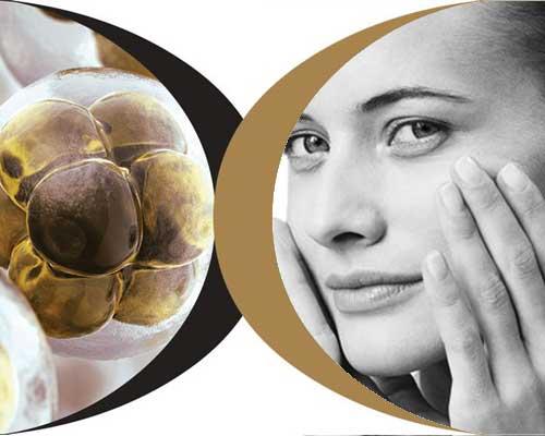 liệu pháp tế bào gốc chống lão hóa
