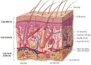 thực tế về da
