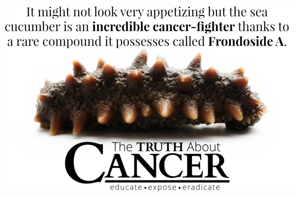 Hải Sâm có hoạt chất chống lại ung thư