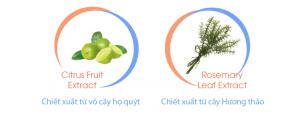 Hoạt chất Nutroxsun – thành phần quan trong của viên uống chống nắng