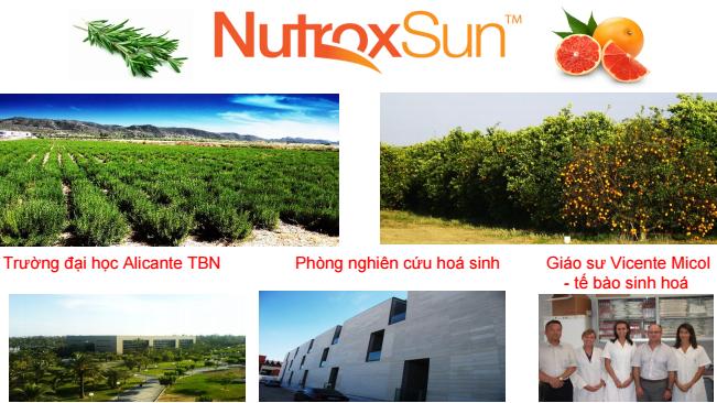 """Hoạt chất Nutroxsun – Thành phần """"vàng"""" trong viên uống chống nắng"""