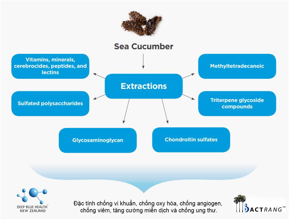 Viên uống hải sâm Deep Blue Health Sea Cucumber 4